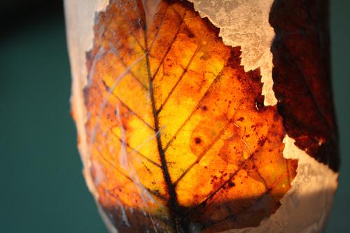 Photo of the leaf lantern